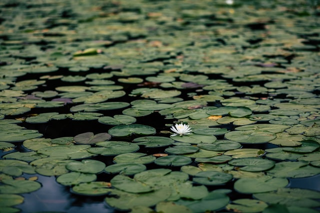 How to Keep Your Pond Clean