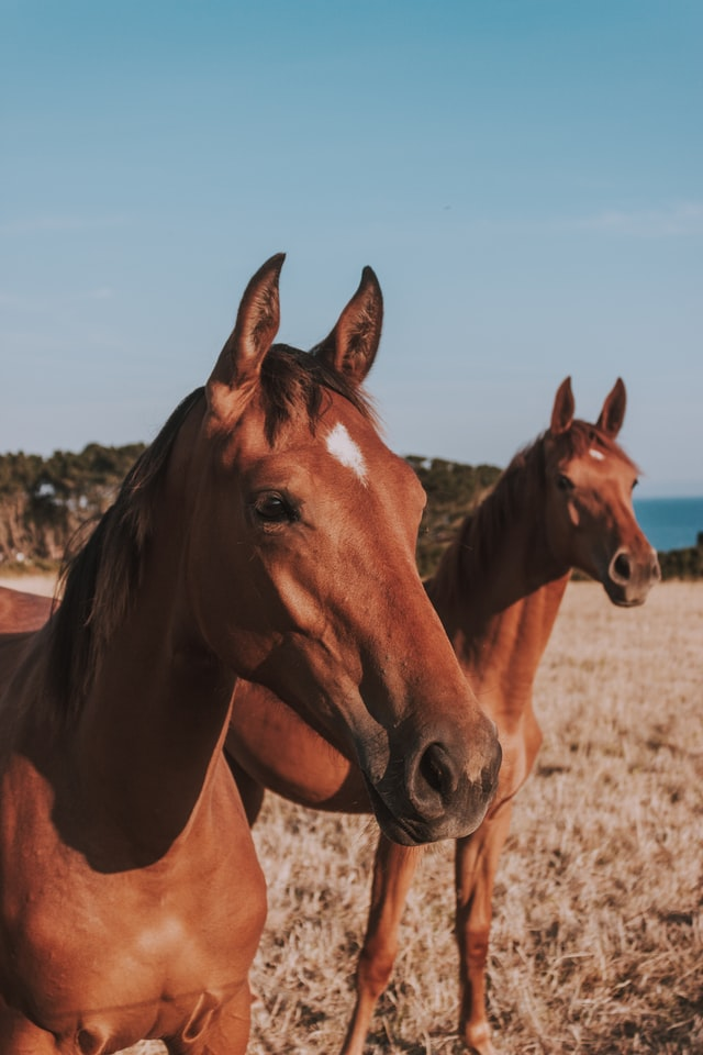 Things To Think About When You Want To Get a Horse